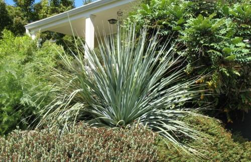 The Desert Northwest Plant Galleries